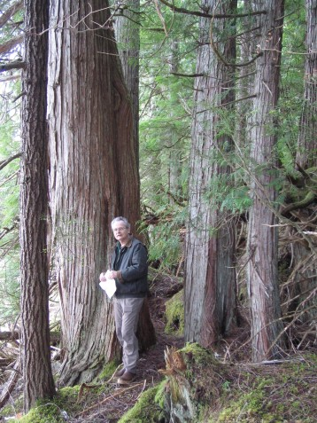 Naukati Old Growth