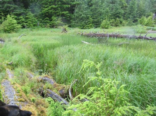 Muskeg along Setter Creek